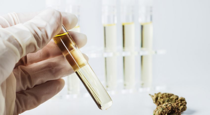 Comparing Full Spectrum CBD Oil With CBD Isolate: An Overview!
