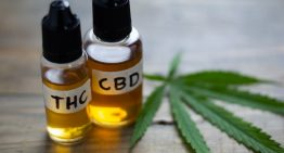 Where Does THC Come From?